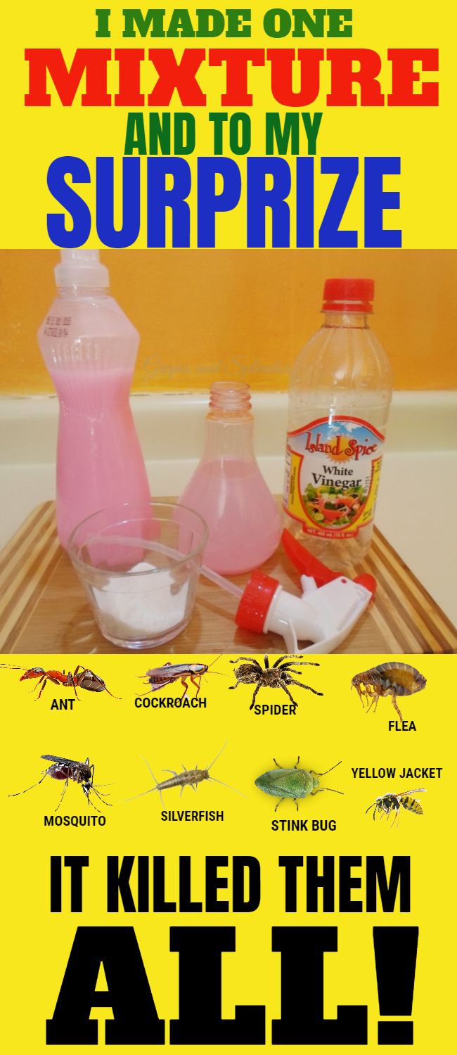 How to make a weed killed that can kill insects on spot. This mixture is a great hack to get rid of weed and insects in a safe way.