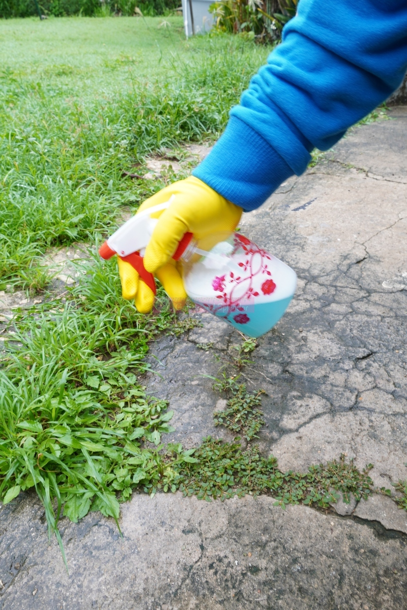weed killed that can kill insects on spot. This mixture is a great hack to get rid of weed and insects in a safe way.
