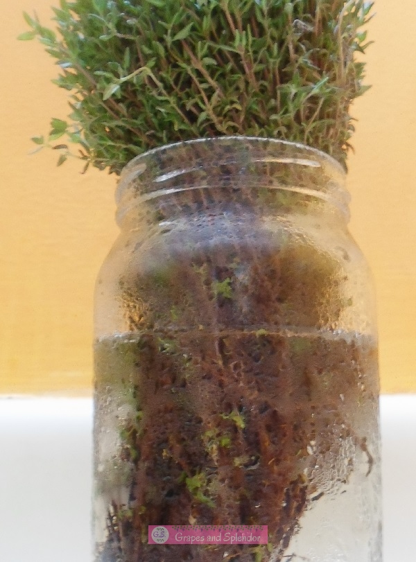 Here is a great way to make fresh thyme last longer and how to use thyme in the home and garden.