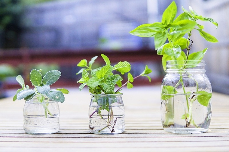 How To Keep Herbs Fresh For Longer